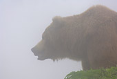 BEA 01 WF0008 01