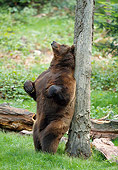 BEA 01 WF0011 01
