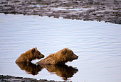 BEA 01 NE0002 01