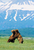 BEA 01 NE0005 01