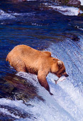 BEA 01 NE0007 01