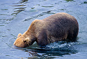 BEA 01 NE0008 01