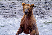 BEA 01 NE0010 01
