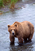 BEA 01 NE0011 01