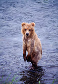 BEA 01 NE0013 01