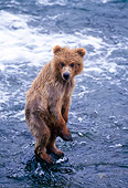 BEA 01 NE0014 01