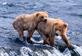 BEA 01 NE0015 01