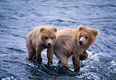 BEA 01 NE0016 01
