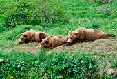 BEA 01 NE0018 01