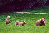 BEA 01 NE0019 01