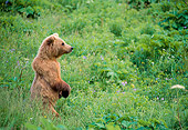 BEA 01 NE0020 01