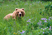 BEA 01 NE0021 01