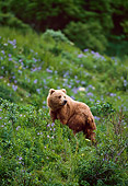 BEA 01 NE0022 01