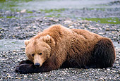 BEA 01 NE0023 01