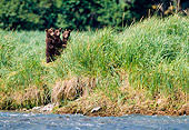 BEA 01 NE0026 01