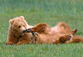 BEA 01 NE0028 01