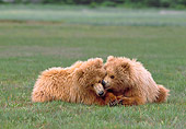 BEA 01 NE0029 01