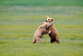 BEA 01 NE0031 01