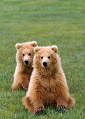 BEA 01 NE0033 01