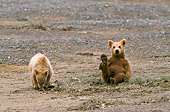 BEA 01 NE0035 01