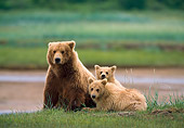 BEA 01 NE0043 01