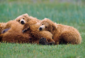 BEA 01 NE0045 01
