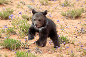 BEA 02 AC0002 01