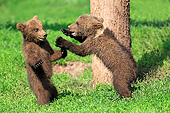 BEA 02 AC0006 01