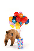 BEA 02 RK0034 03