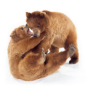 BEA 02 RK0042 08