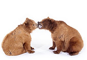 BEA 02 RK0043 06