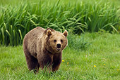 BEA 02 WF0002 01