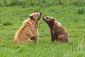 BEA 02 WF0003 01