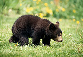 BEA 02 DB0001 01