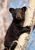 BEA 02 DB0002 01
