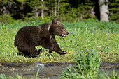BEA 02 KH0002 01
