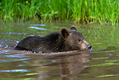 BEA 02 KH0004 01