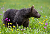 BEA 02 KH0010 01
