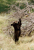 BEA 02 RF0001 01