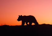 BEA 02 TK0003 01