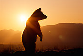BEA 02 TK0006 01