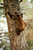 BEA 02 TL0005 01