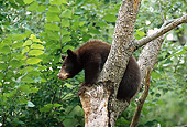 BEA 02 TL0007 01