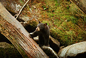 BEA 02 TL0010 01