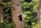 BEA 02 TL0011 01