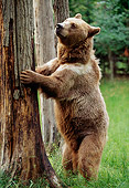 BEA 03 BA0002 01