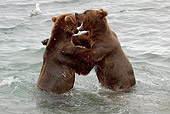 BEA 03 LS0004 01