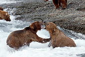 BEA 03 LS0005 01