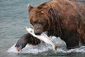 BEA 03 LS0007 01