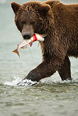 BEA 03 MC0001 01